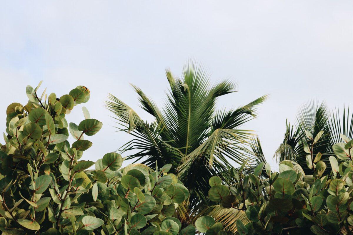 plantenborder